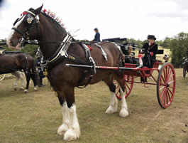 Governess cart at Riffhams, Essex Carriages in the Park Event